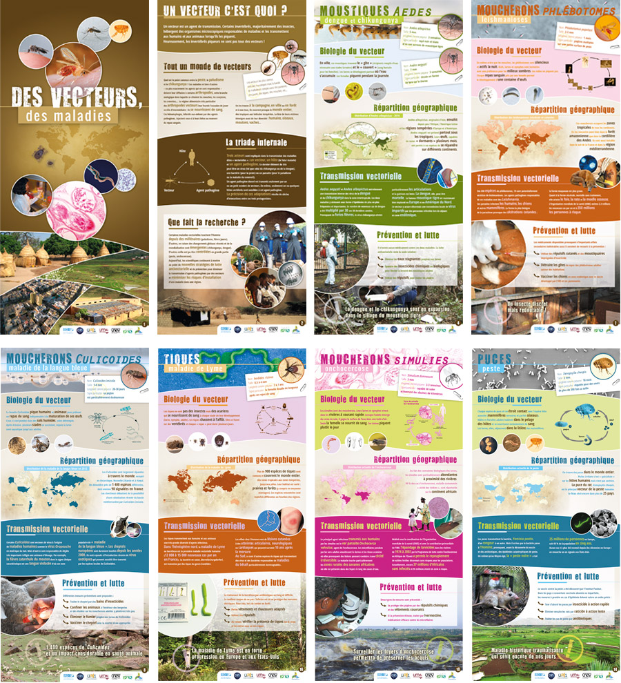 posters_ird_insectes